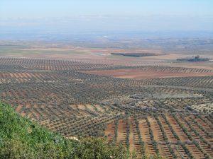 10 mar de olivos
