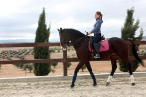 Dressage at San José Yard