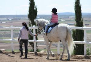 Educaci�n caballos