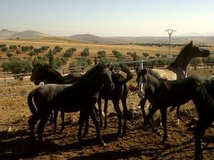 caballos Hípica cerca de madrid