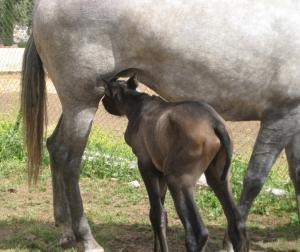 caballos hípica toledo